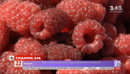 Сезон малины в разгаре: как выбрать сладкую ягоду и запастись витаминами на зиму