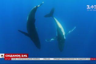 Поразительные факты о китах и дельфинах – Поп-наука