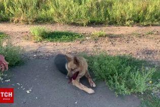 В Одеській області водій спеціально двічі збив автомобілем свого собаку