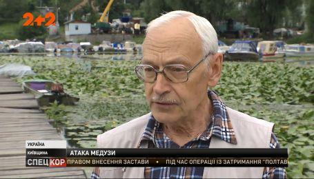 Медузы атакуют речку Днепр