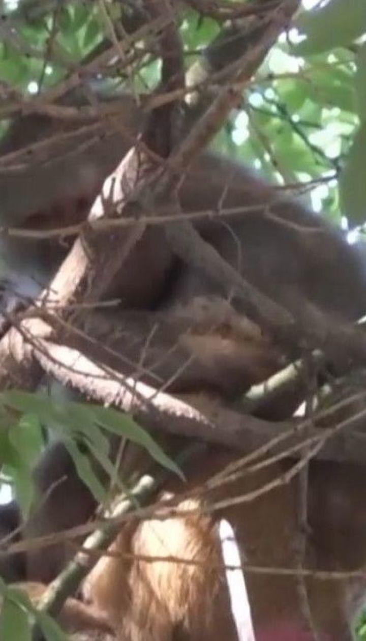 Спецоперація в центрі Одеси: ловили трьох мавп, які втекли із зоопарку.