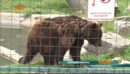 В лесах Закарпатья много лет работает центр помощи медведям