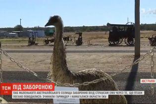 Австралийский ресторан запретил вход страусам эму
