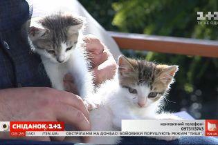 Кошенята Льолік і Болік шукають дім