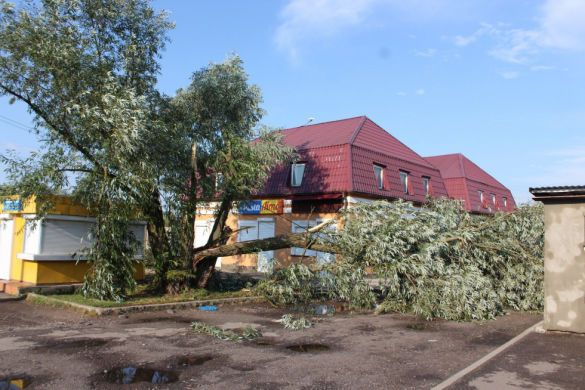 повалені дерева західна Україна