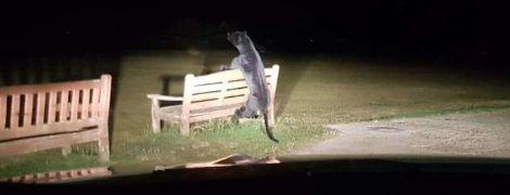 """В Британии копов вызвали из-за пантеры в парке - """"хищник"""" оказался игрушкой"""