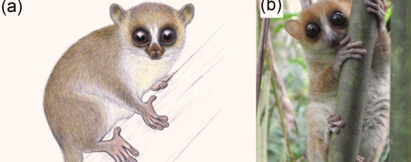 На Мадагаскаре нашли одного из самых маленьких родственников приматов в мире