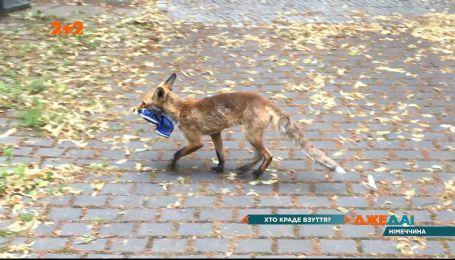 В экологическом районе Берлина местные поймали лису на краже обуви