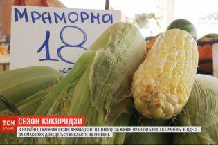 Сладкий злак: как выращивают сахарную кукурузу и где ее выгоднее купить