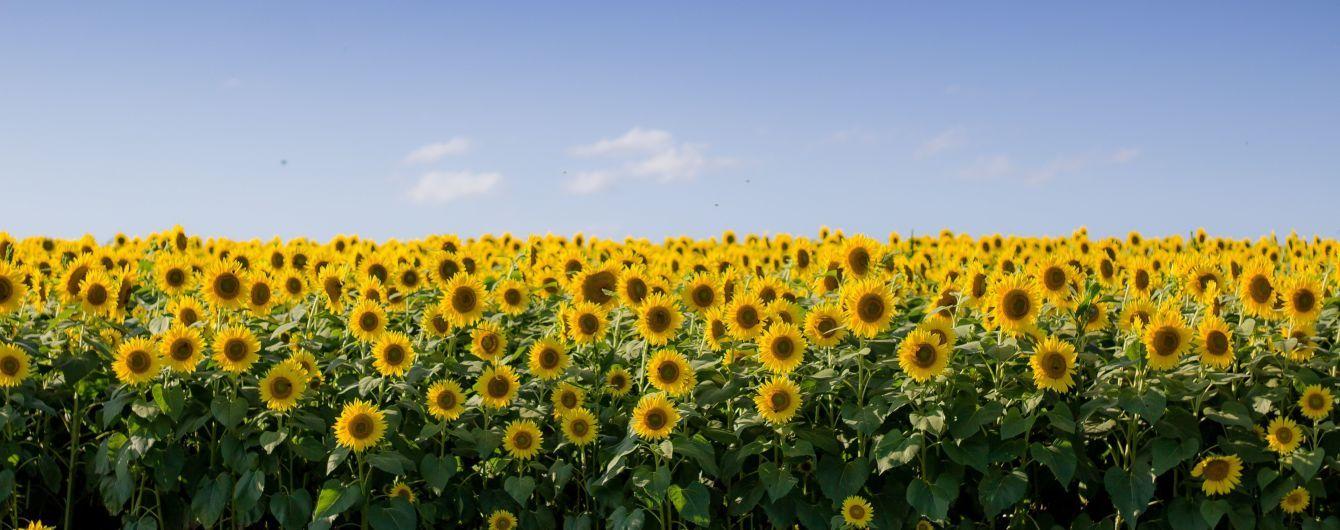 Преимущественно сухо и жарко: прогноз погоды в Украине на понедельник, 20 июля