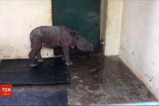 Щасливий порятунок: в Індії в затопленому національному парку врятували дитинча носорога
