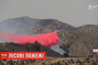 В Калифорнии горят 8 тысяч гектаров леса