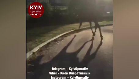В Киеве на Саперно-Слободской по дороге бегает огромный лось