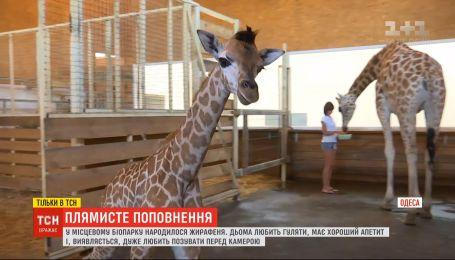 В одеському біопарку народилося жирафеня