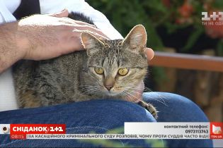 Котики Тошка і Туся шукають своїх господарів