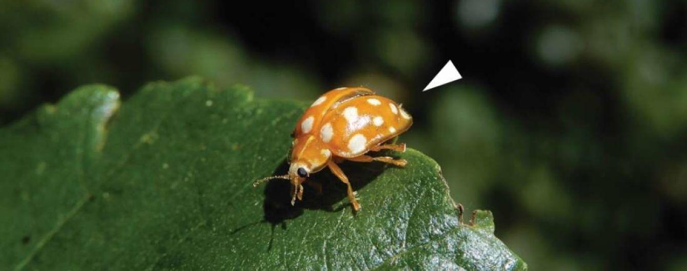 Ученые обнаружили новый вид гриба и назвали его в честь карантина