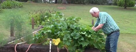 Американец посадил загадочные семена из Китая и вырастил странные плоды