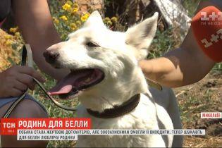 Зоозахисники шукають родину для собаки Белли