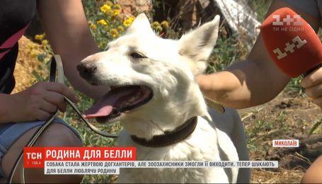 Зоозащитники ищут семью для собаки Беллы