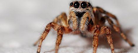 Shazam для отруйних істот: в Австралії створили застосунок для розпізнавання павуків та змій