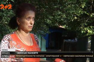 Несамовита зграя свиней тероризує село в Черкаській області