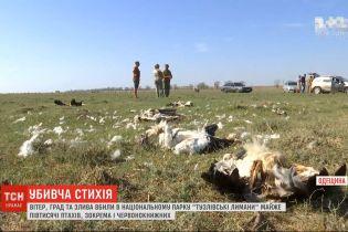 Потужний вітер, град та злива вбили майже пів тисячі птахів в Одеській області