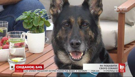 Порадуй свою собаку: кинолог Владислав Плахтий рассказал, как осчастливить своего любимца