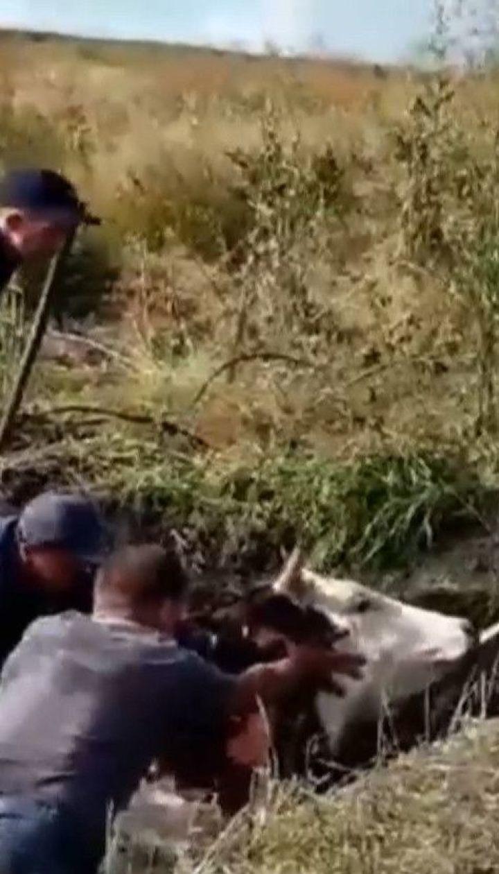 У Харківській області рятувальники діставали корову з покинутого колодязя