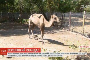 Ребра через кожу: зоозащитники выступили в защиту истощенного верблюда в эко-парке Кобеляк