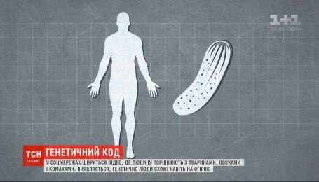 Трохи курка, муха і огірок: у науковому відео людину порівняли з тваринами і овочами