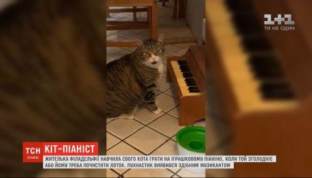 Жителька Філадельфії навчила свого кота грати на іграшковому піаніно