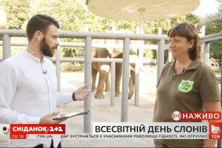 Как живет слон Хорас в киевском зоопарке и почему слоны нуждаются в защите