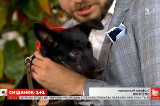 Собачка Ада шукає турботливу родину