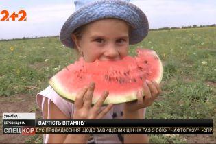 У Херсонській області масово почали збирати українські кавуни, які виростили без плівки і добрив