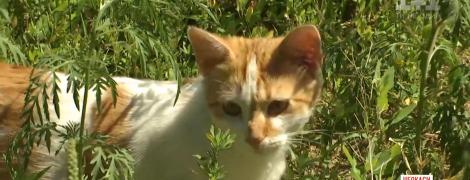 Через 10 дней в Украине активизируется амброзия: чем опасно растение и как с ним бороться