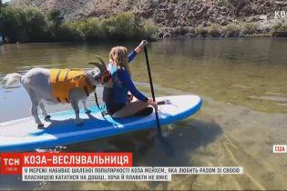 Коза-веслувальниця: у Мережі набуває шаленої популярності рогата, яка любить кататися на дошці