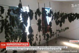 """У Херсонській області """"наркоагрономи"""" висадили 1500 добірних кущів конопель"""