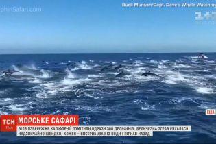 Біля узбережжя Каліфорнії три сотні дельфінів влаштували видовище на воді