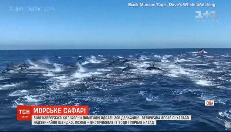 У побережья Калифорнии три сотни дельфинов устроили зрелище на воде