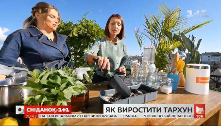 Тархун: правила выращивания и рецепт полезного лимонада