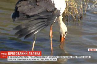 """У національному парку """"Тузлівські лимани"""" виходили й нарешті випустили на волю лелеку"""