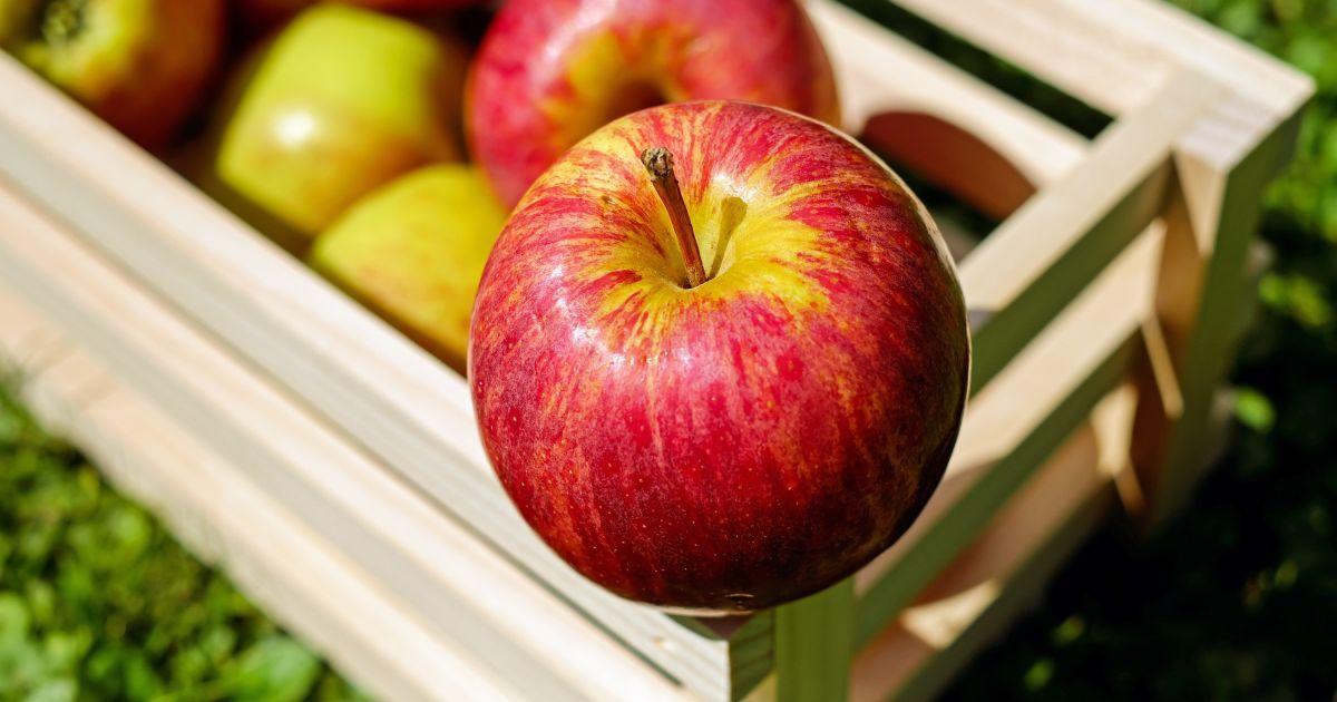 Яблоки-гиганты: на Закарпатье собрали необычный урожай