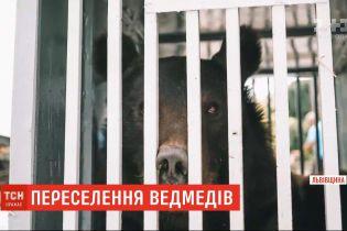 Порятунок клишоногих: ведмеді з приватного звіринця перетнули Україну дорогою до нового дому