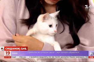 Грайлива кішечка Б'янка шукає господарів