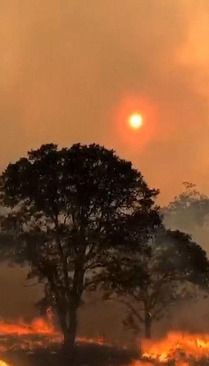 У Каліфорнії лісові пожежі набувають катастрофічних масштабів