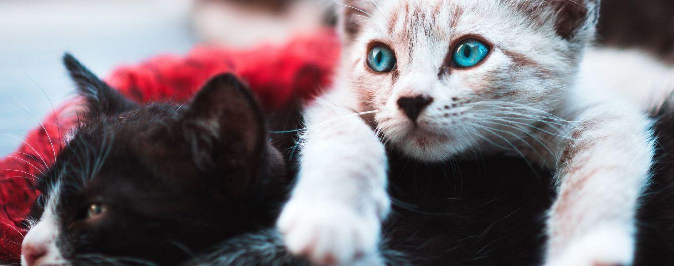 У Львівській області чоловік ув'язнив у гаражі десятки котів: для чого він це зробив та що кажуть зоозахисники