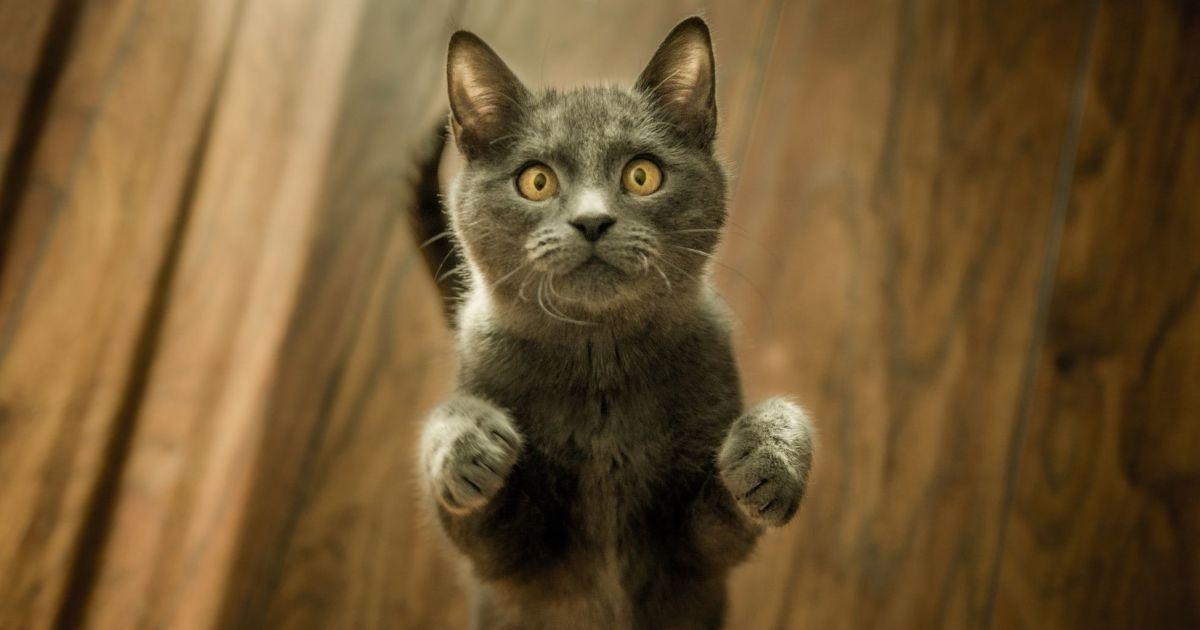Викинула з вікна і добивала ножем: в Одесі власниця жорстоко вбила кота