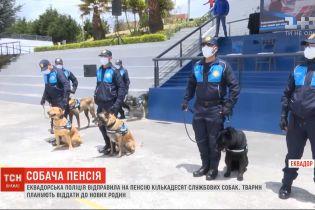 Эквадорская полиция отправила на пенсию несколько служебных собак
