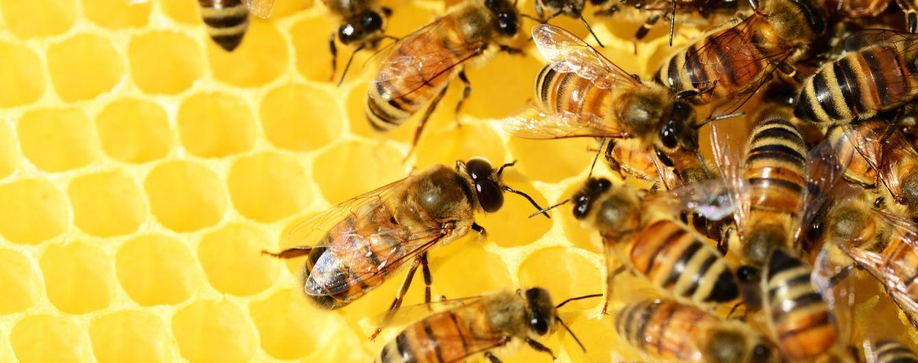 Продали понад 40 мільйонів кілограмів: Україна цього року стала лідером з експорту меду до ЄС
