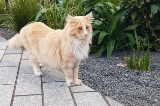 Кота-зірку номінували на звання новозеландця року